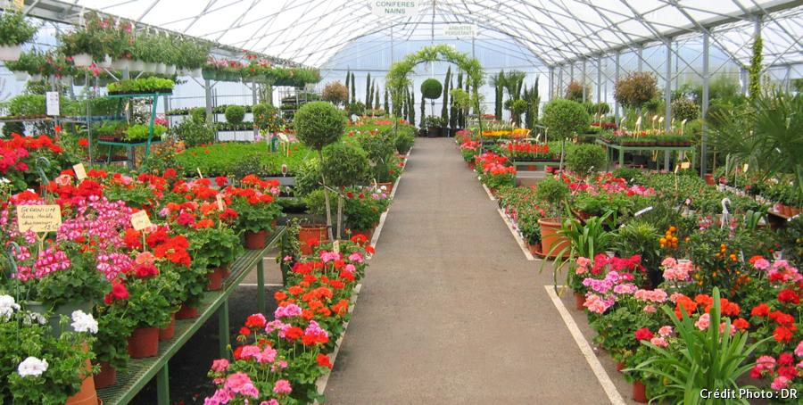 Jardin de berger végétaux colorés