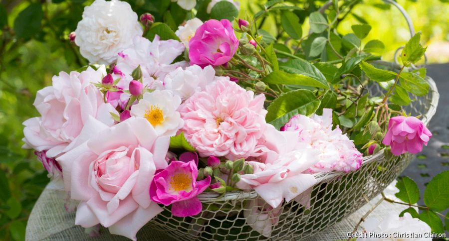 Panier en osier rempli de jolies roses anciennes colorées