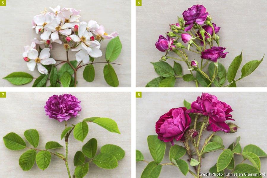 Composition de 4 différentes roses