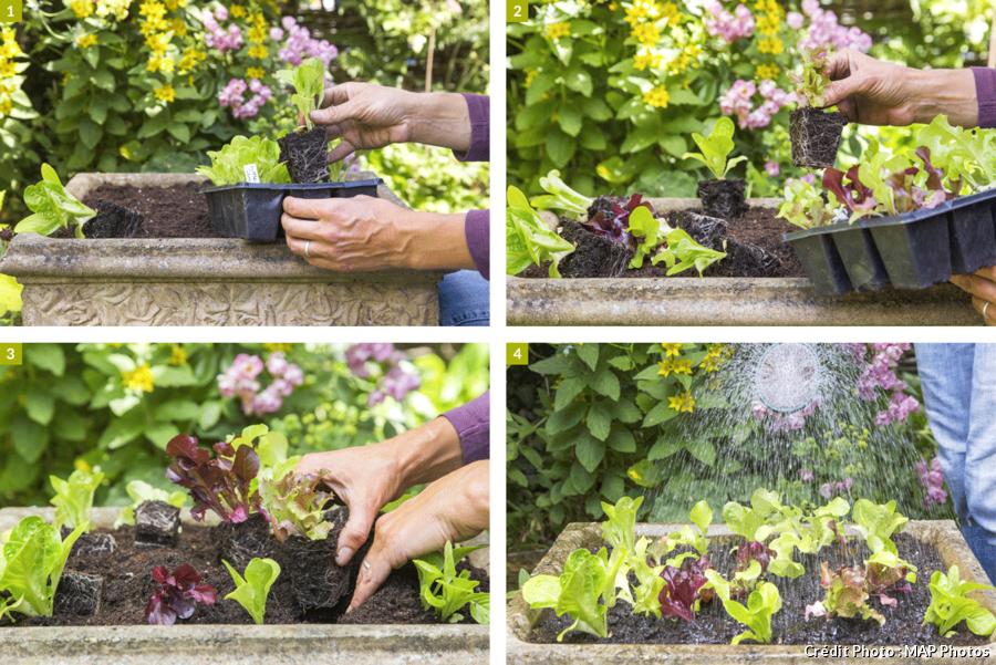 Comment planter ses salades en pot en 4 étapes