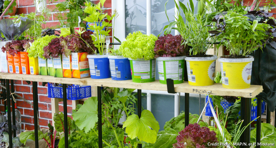 Salade En Pot Comment Les Planter 4 Etapes Simples