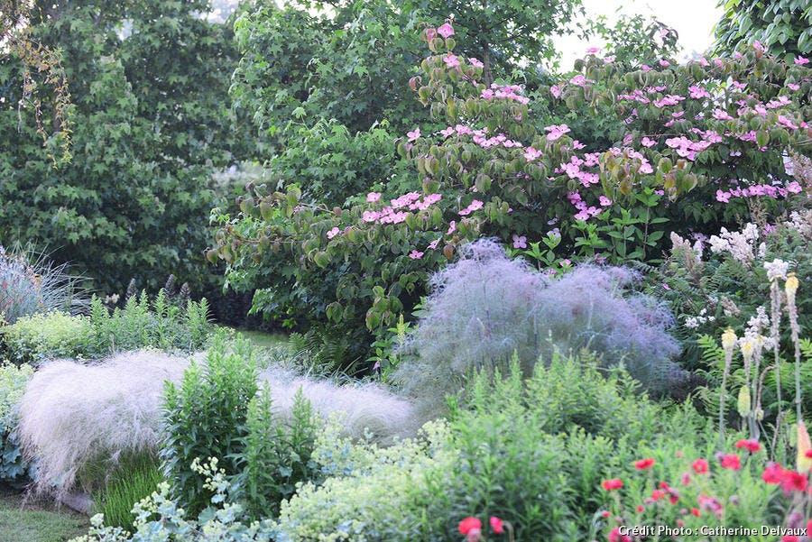Jardin rêve de Pan marguerite et cornus kousa