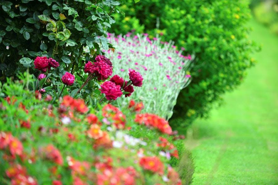 Jardin Reve de pan plate-bande rouge