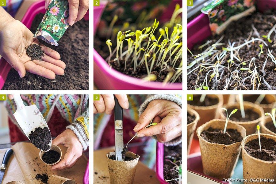 Comment semer les dahlias par étape