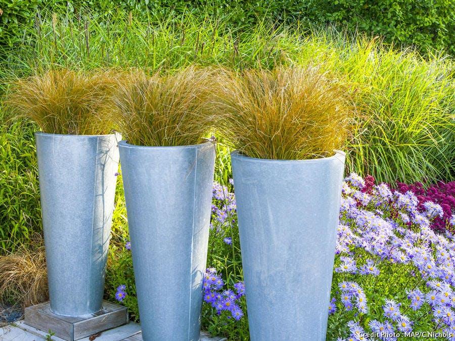 Carex flagellifera en pot
