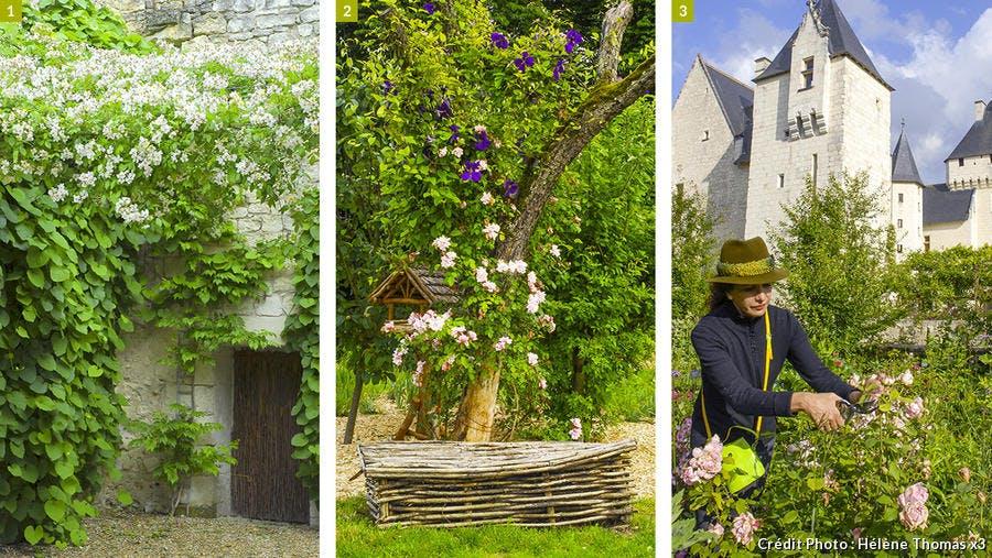dj125-chateau-rivau-roses-toute-la-saison-beatrice-pichon.jpg