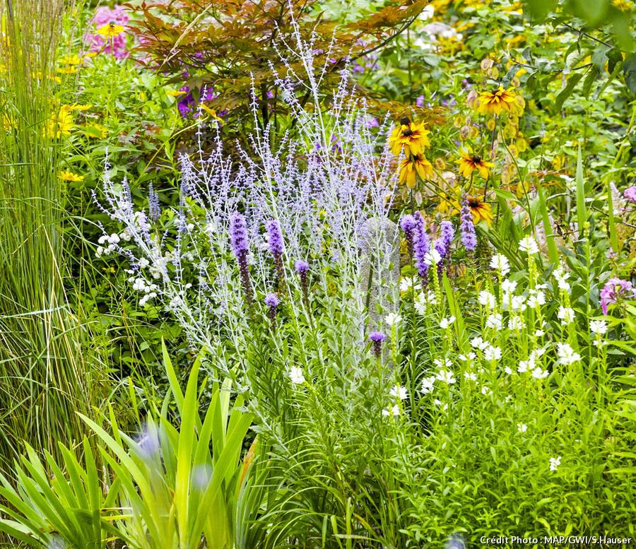 Haie fleurie toute l\'année : arbuste à fleur et graminées ...