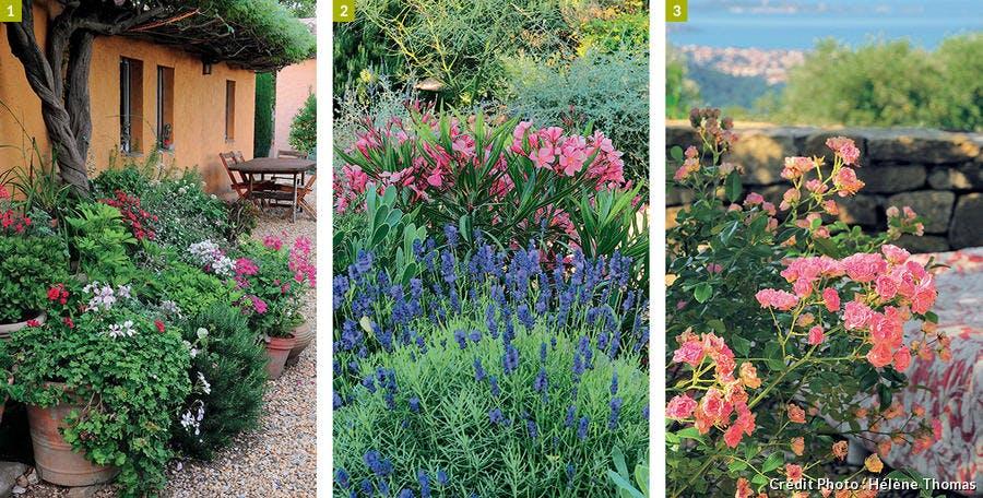 Pélargoniums, lavande et laurier-rose, rosier