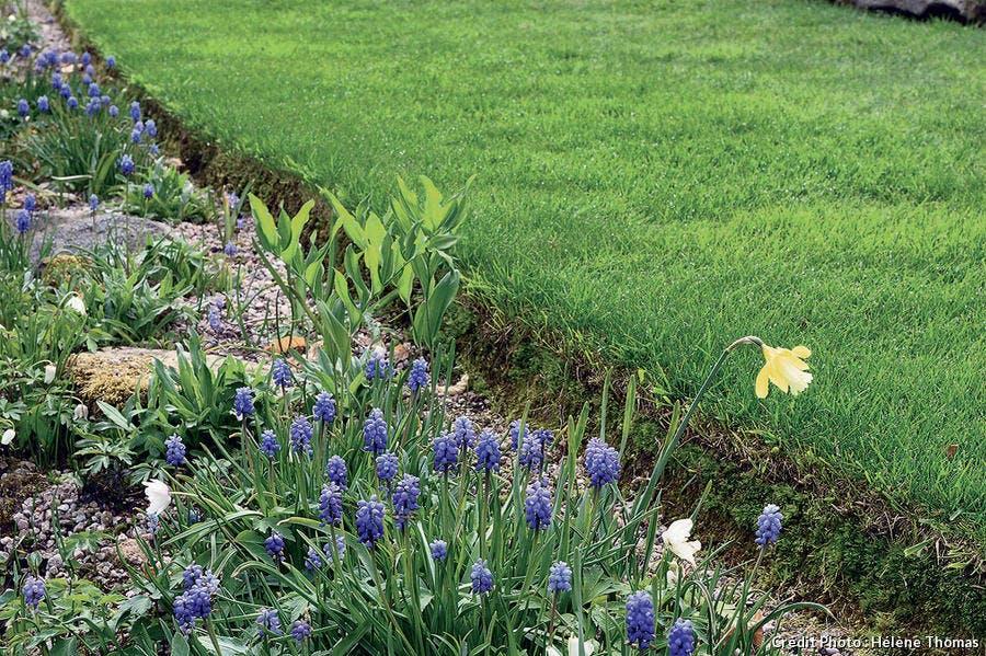 Gazon et bordure impec au jardin de Berchigranges