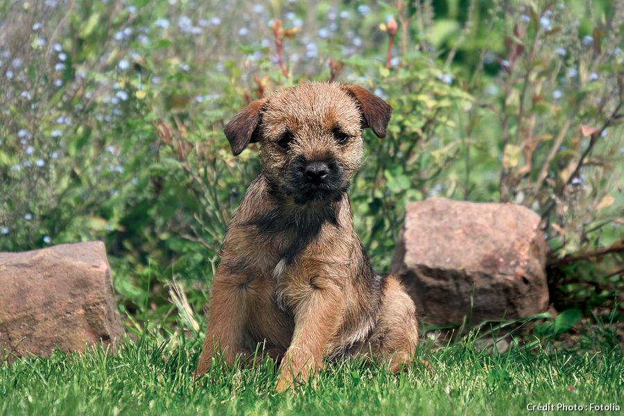 Quand chiens et plantes font bon m nage d tente jardin - Quand mettre du fumier dans son jardin ...