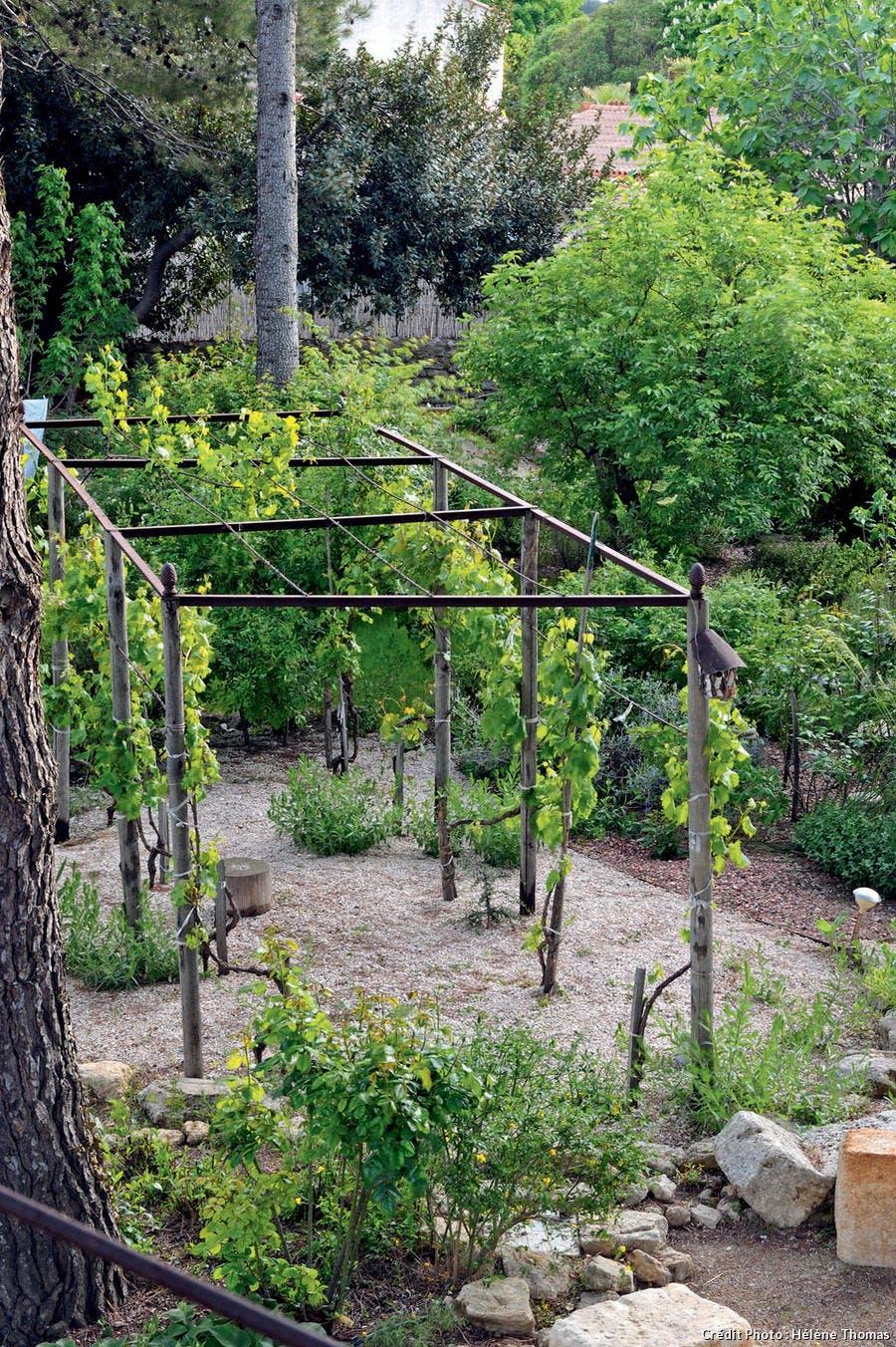 Une tonnelle couverte de vigne.