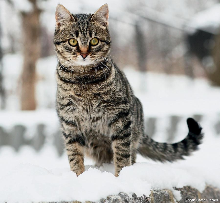 Un chat dans la neige