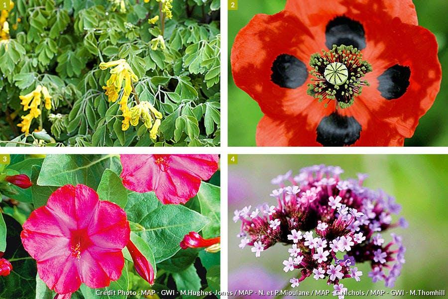 Plantes annuelles faciles à entretenir