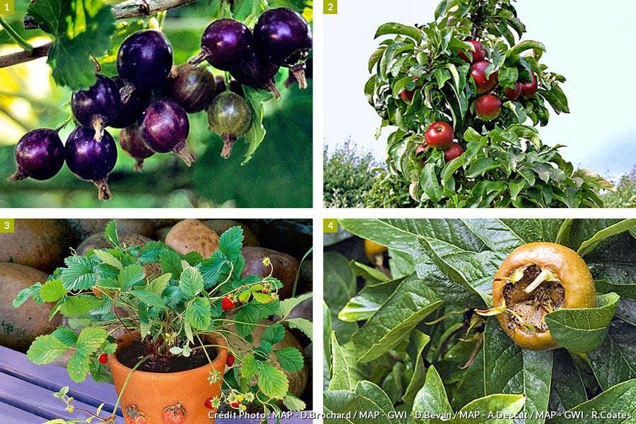 Des fruitiers simples à entretenir toute l'année