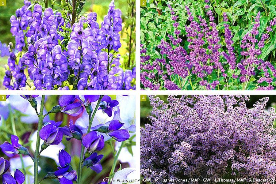 Plantes vivaces faciles d'entretien