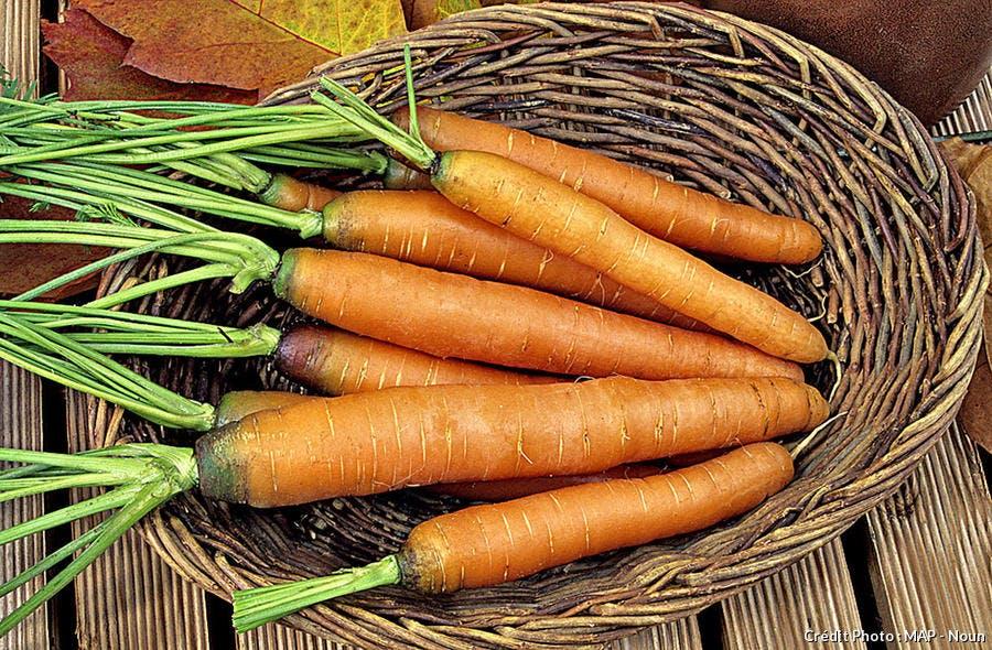 La carotte 'Touchon'