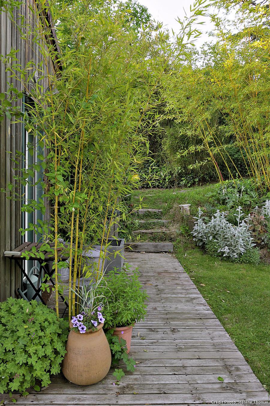 Un plancher de bois et des bambous dans le jardin de François