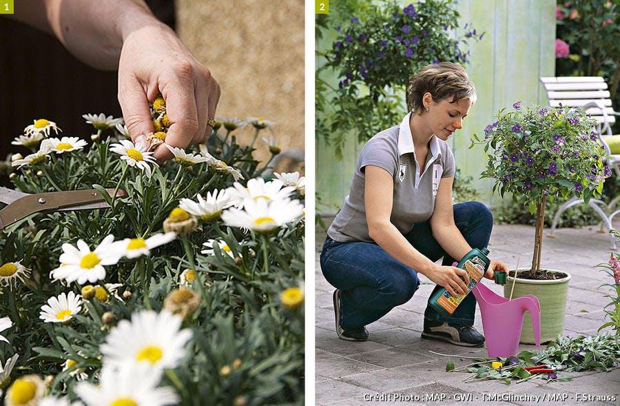 Composition jardinière