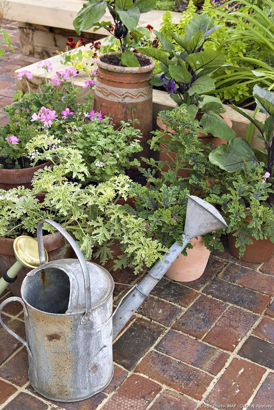 arrosoir plantes pot