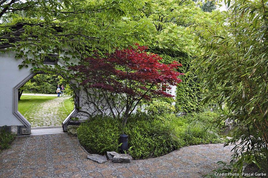 Fiche pratique : Les érables du Japon - Détente Jardin