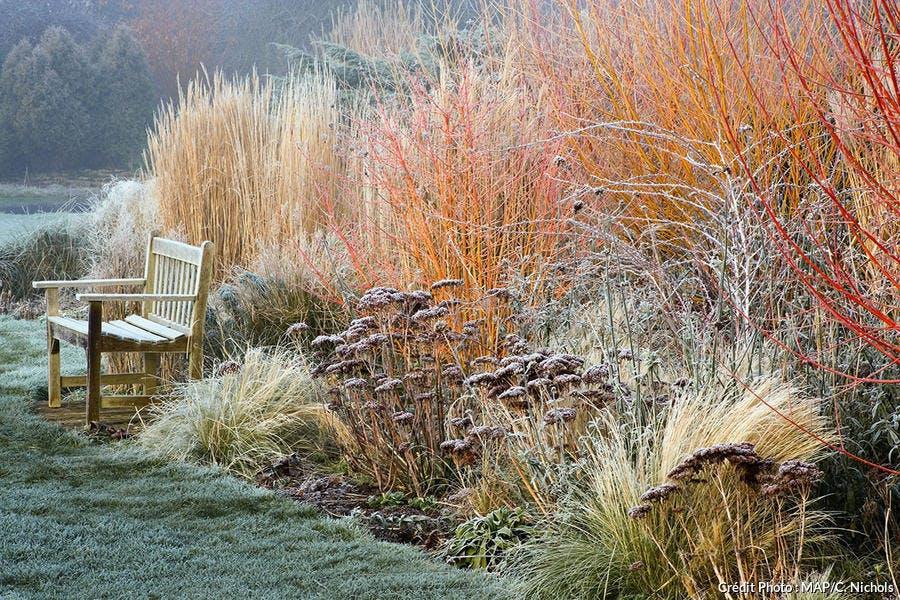 Un jardin en hiver