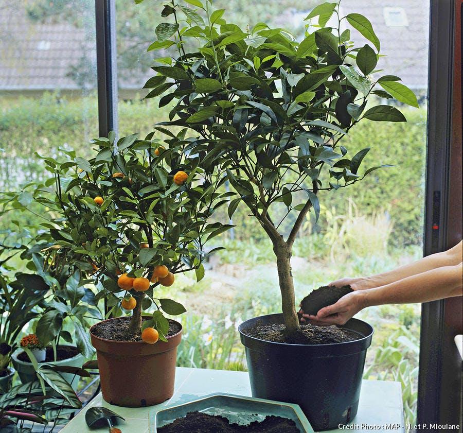surfaçage d'une plante