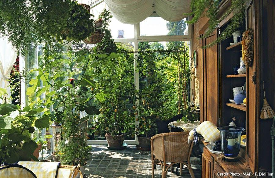 Plantes d'intérieur en véranda
