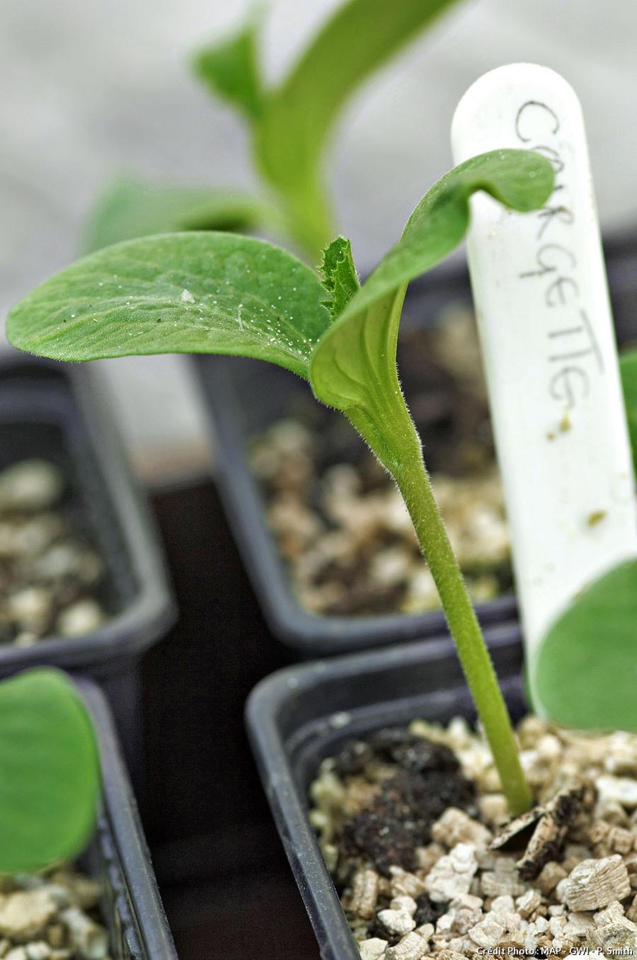 semis en pot avec étiquette