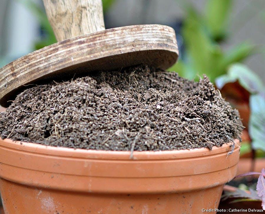 tasser la terre des pots