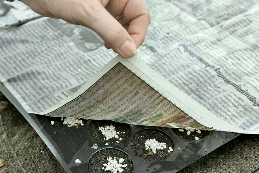 graines couvertes avec du papier journal