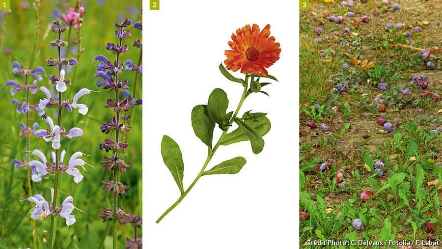 Les plantes qui accueillent les papillons