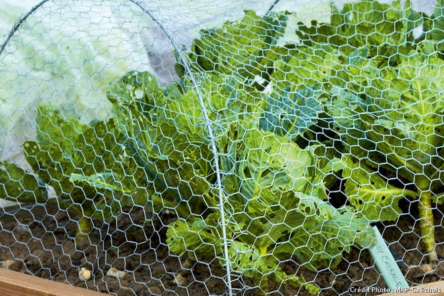 potager carre protection