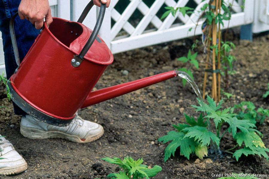 arrosage des plants après plantation