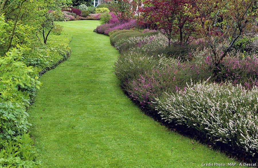 large allée pelouse