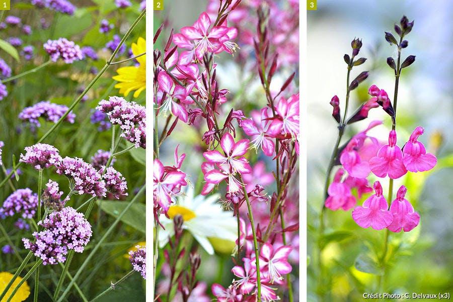 Plantes à longue floraison