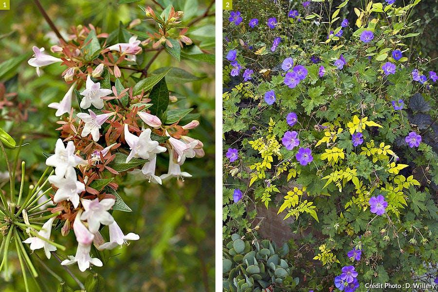plantes longue floraison