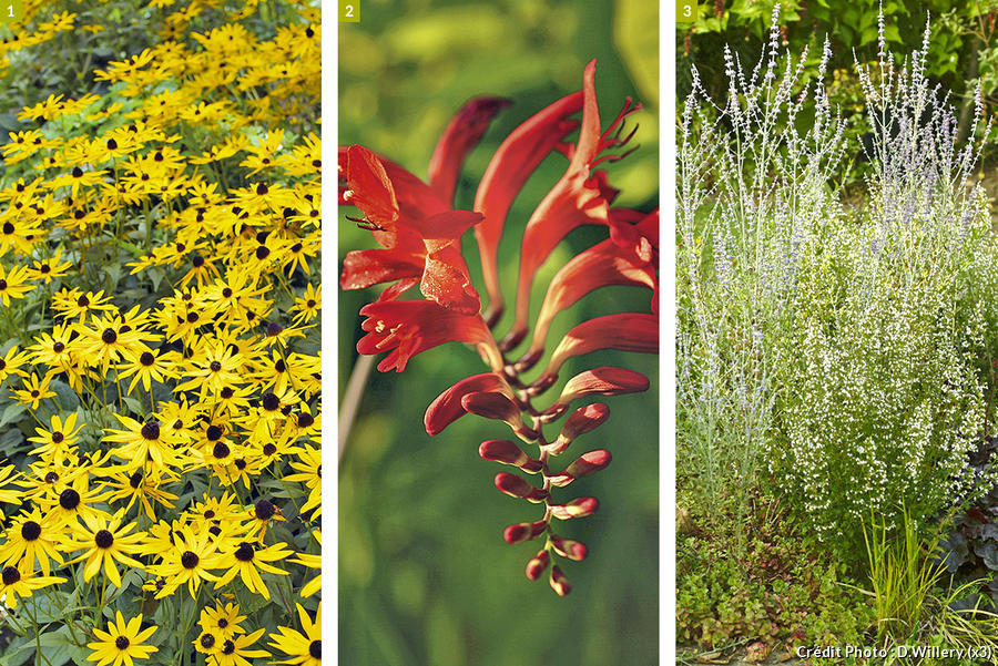 plantes floraison facile