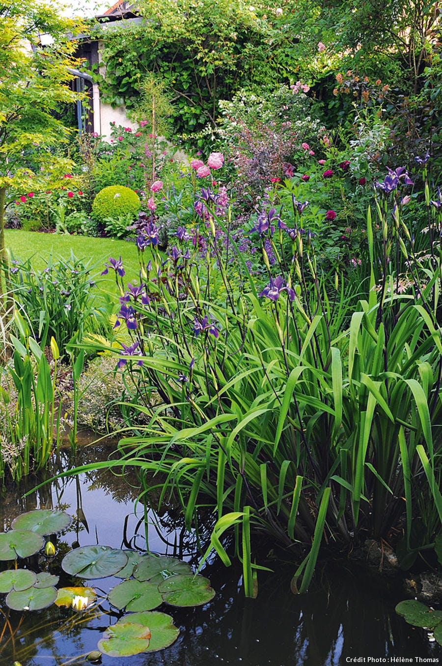Mare avec des nymphéas, des iris japonais et des pontédéries