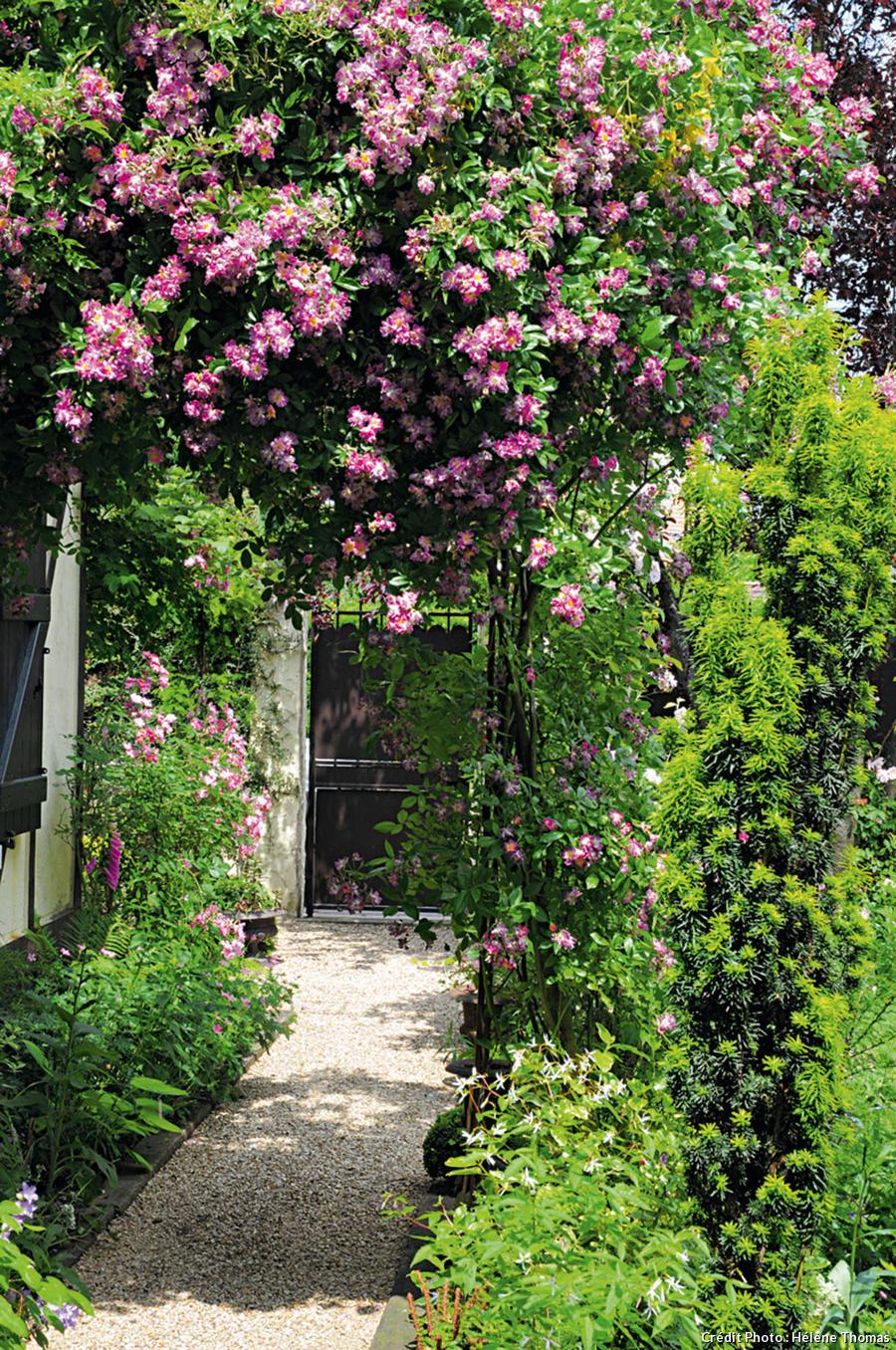 Voûte de rosiers à l'entrée