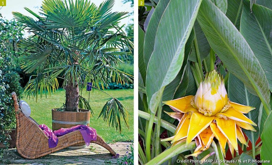 Palmier et bananier