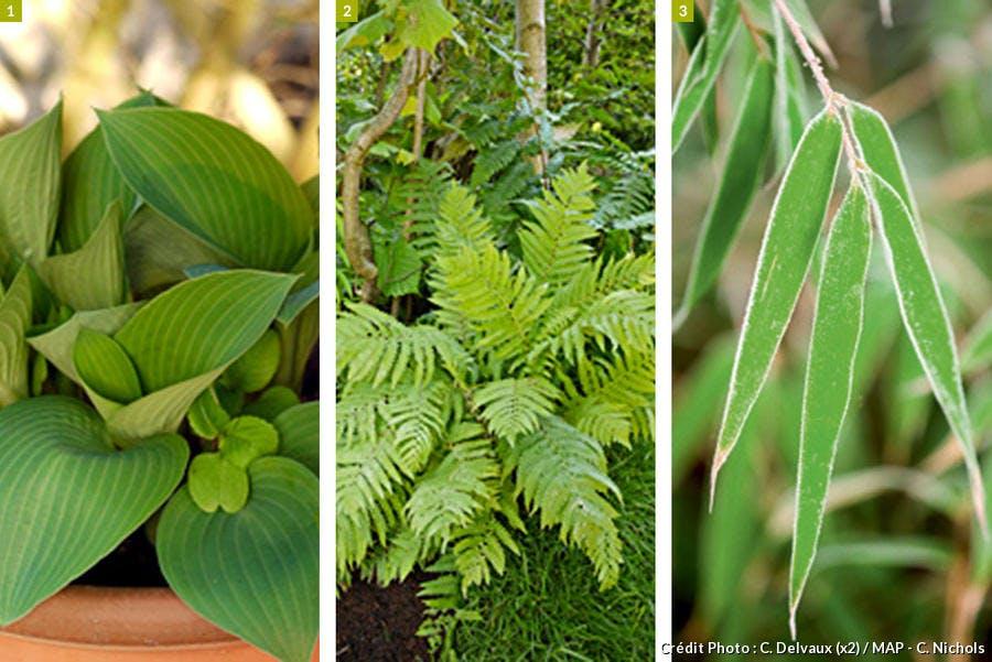 plantes zen