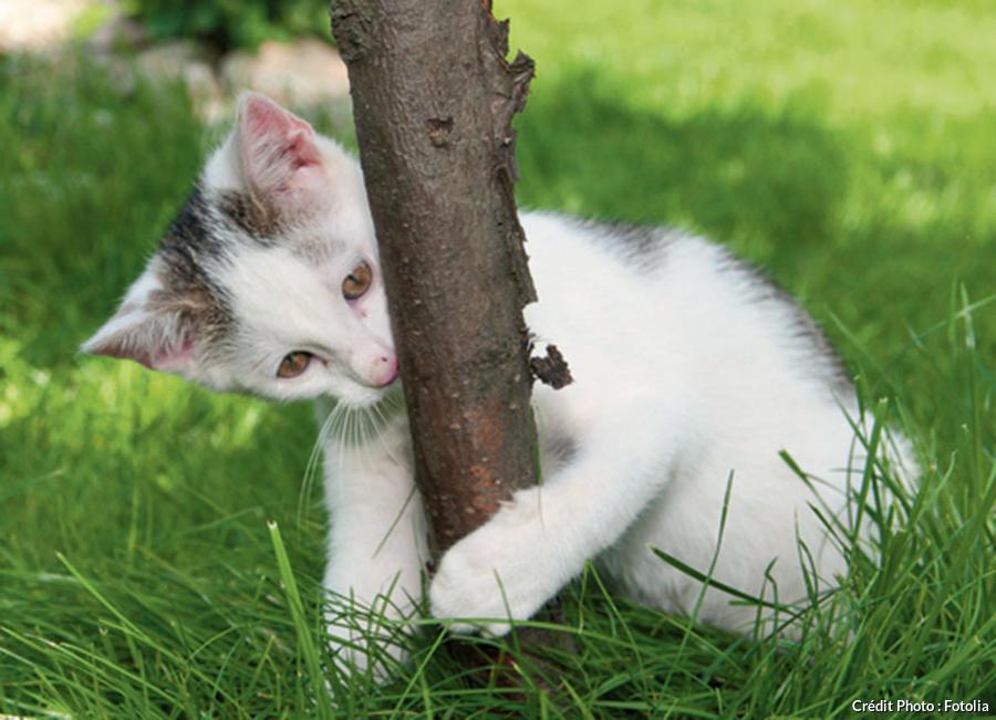 Chat mordillant un arbre