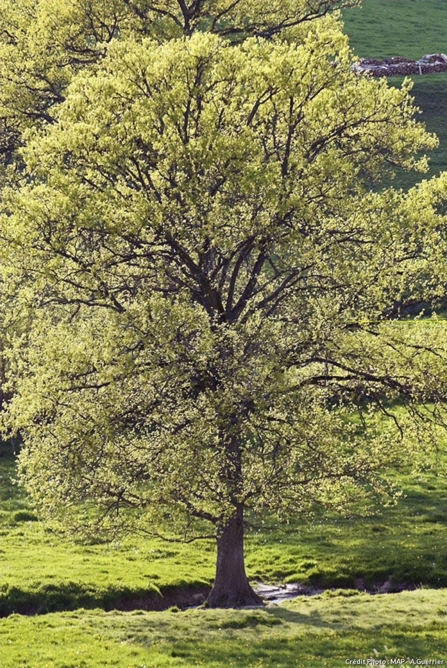Comment Planter Un Arbre Fruitier châtaignier : les 6 étapes de plantation (100% réussite