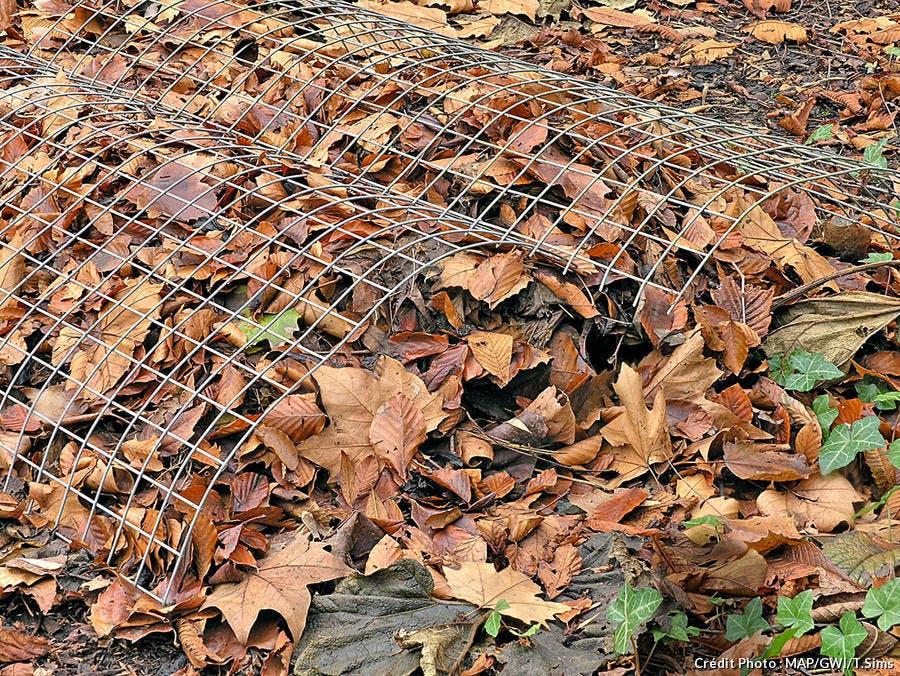 Paillage en feuilles mortes