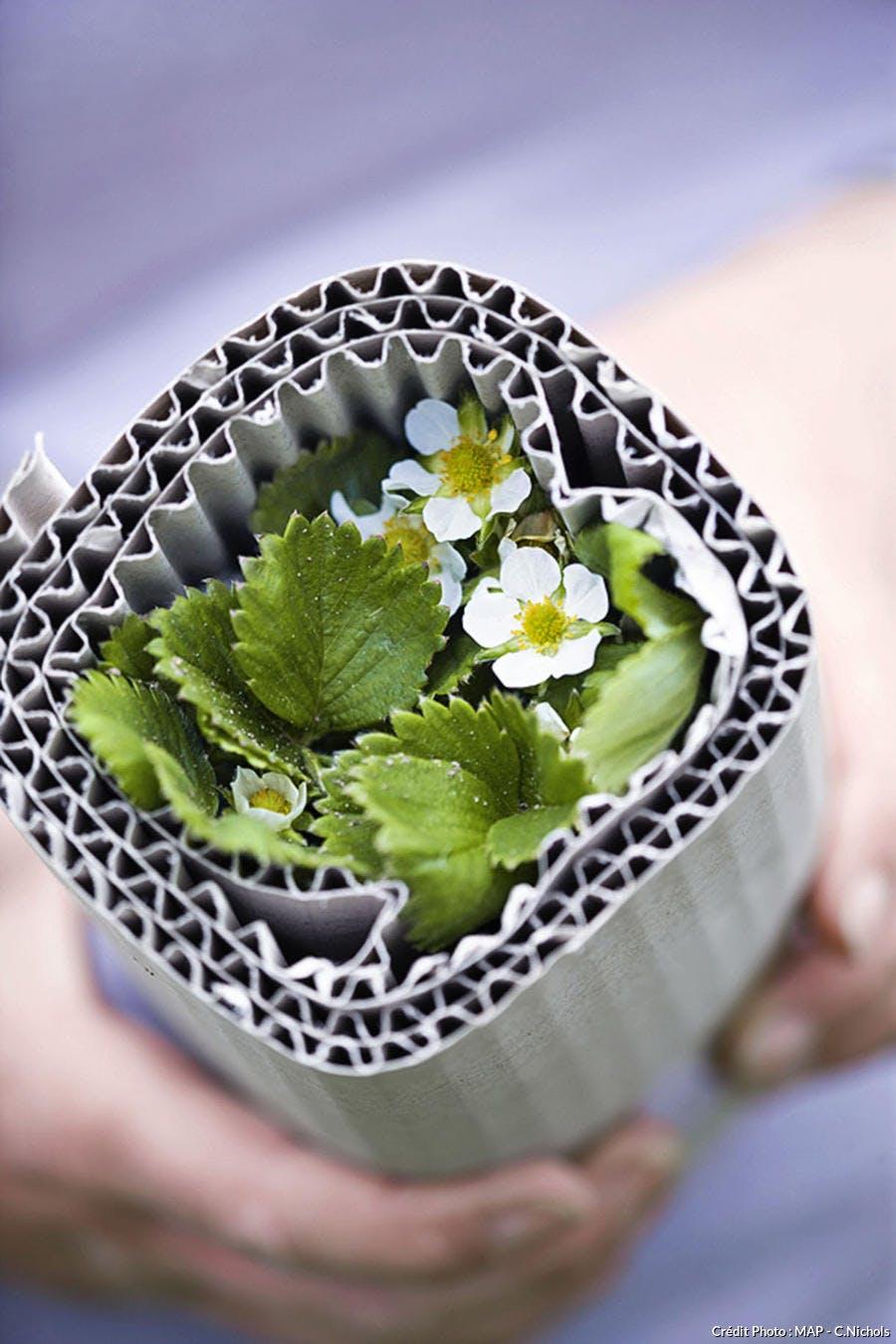 Comment Entretenir Les Fraisiers En Automne quand planter les fraisiers ? - détente jardin