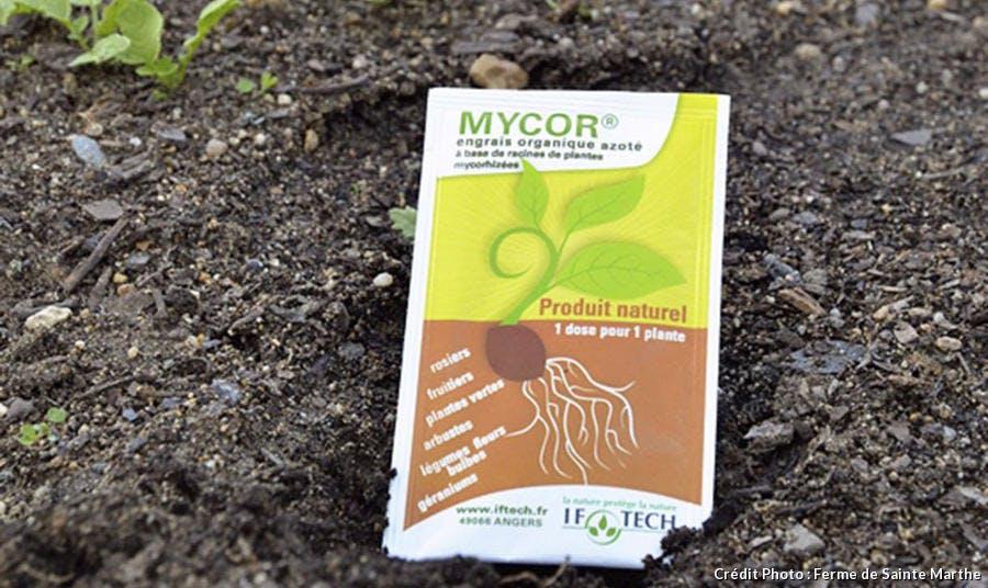 Mycorhize
