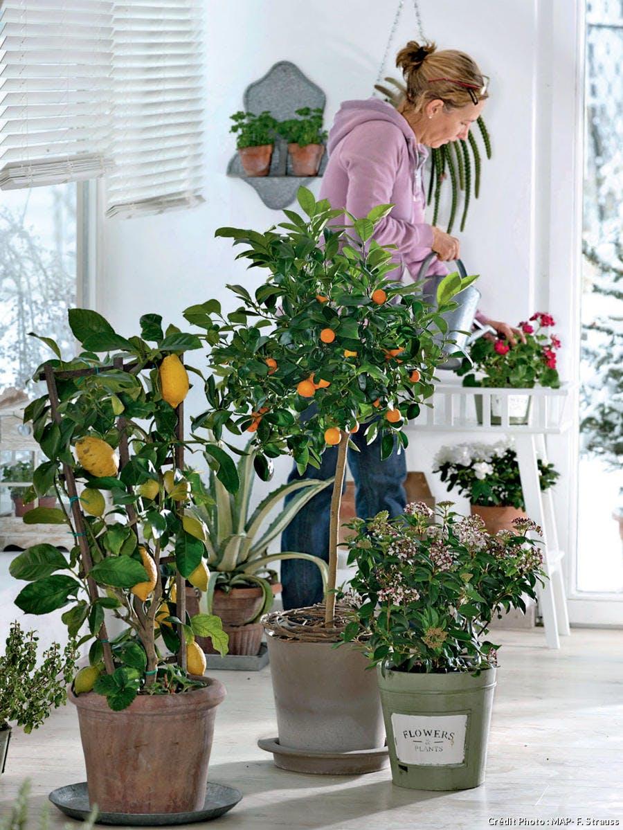 Une femme arrose ses plantes d'intérieur