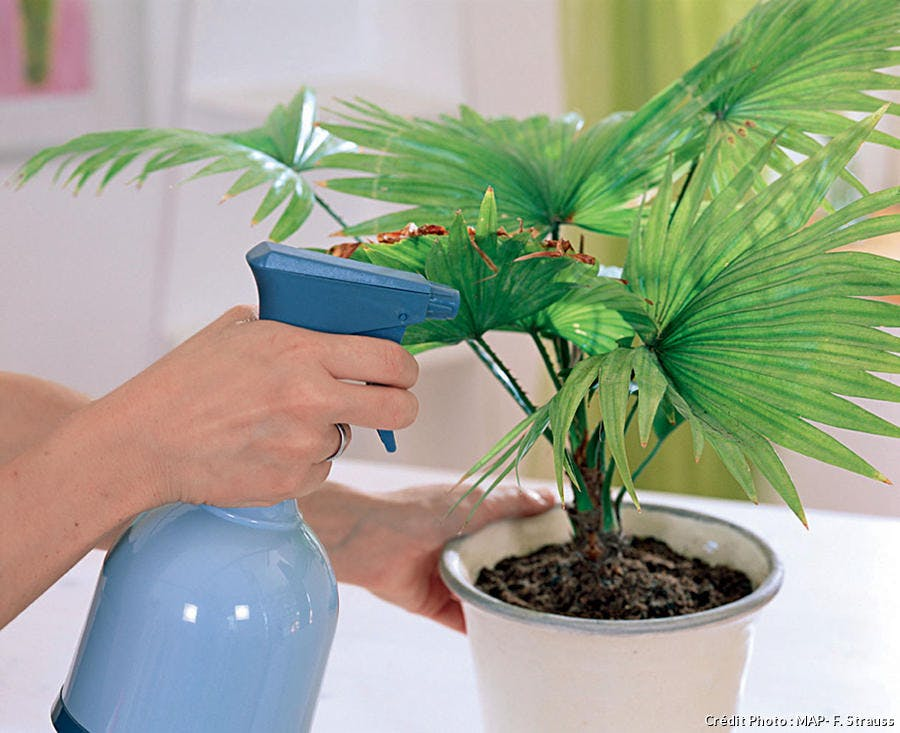 Brumisation des plantes d'intérieur