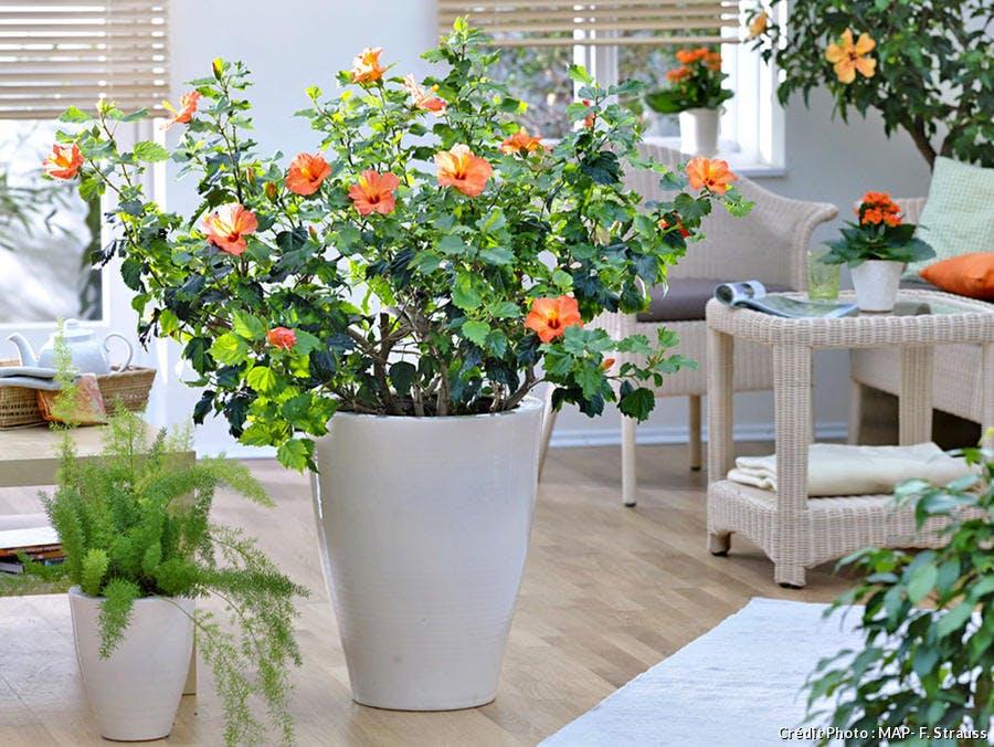 Plantes d'intérieur : faire fleurir