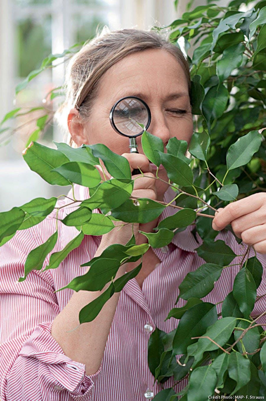Surveiller les plantes d'intérieur